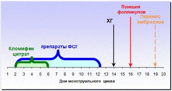 Короткий ЭКО протокол
