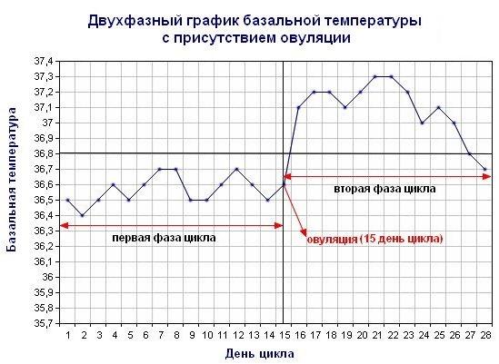 Базальная температура перед месячными, во время овуляции и при беременности