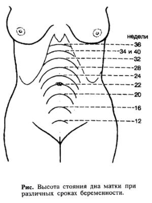 Как определить срок беременности в домашних условиях и в клинике у акушера-гинеколога
