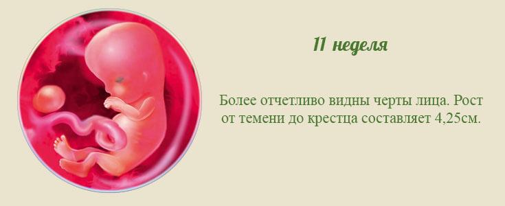 Развитие плода по неделям беременности, по дням, месяцам, фото и описание, видео, ощущения женщины