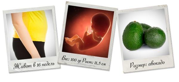 Как развивается плод по неделям беременности в картинках и описание. Ощущения женщины