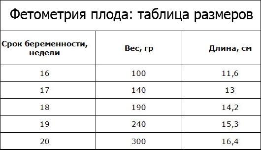 Фетометрия плода по неделям. Таблица, норма в процентилях: окружность головы, живота, мозжечок. Расшифровка УЗИ, цена
