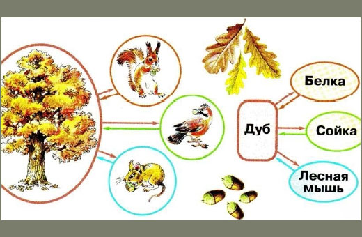 Невидимые нити в осеннем лесу. Презентация окружающий мир 2-3 класс. Конспект урока, схема