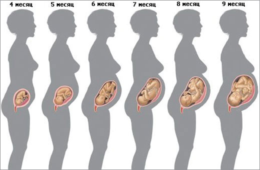 Как растёт живот по неделям беременности у худых, полных. Фото и особенности развития