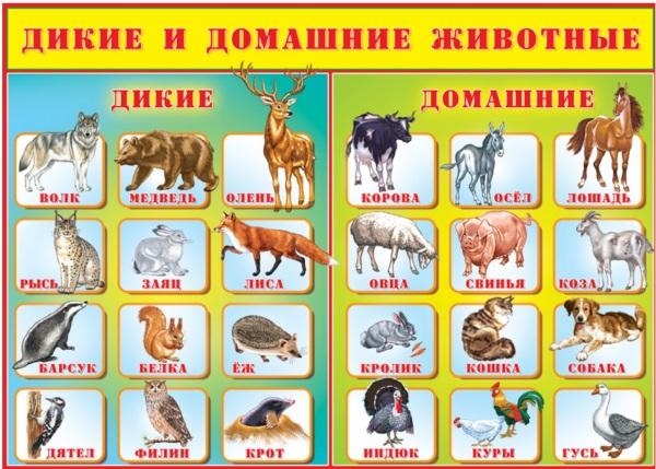 Картинки животных домашних и диких, лесных, хищных для детей с названиями, следами
