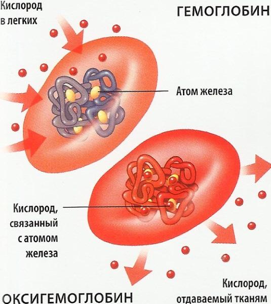 Повышен гемоглобин в крови у ребёнка. Что это значит, причины, лечение, последствия