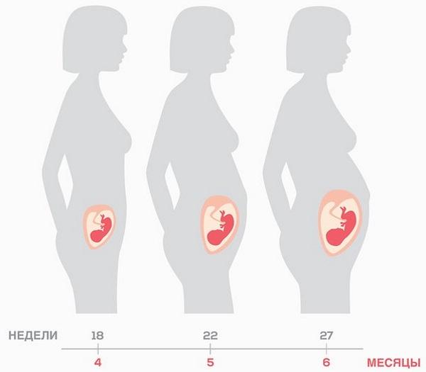 Триместры беременности по неделям и месяцам. Таблица развития плода, живота