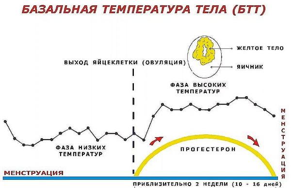Температура тела при беременности на ранних сроках, до задержки, 2-3 триместре. Базальная низкая, повышенная