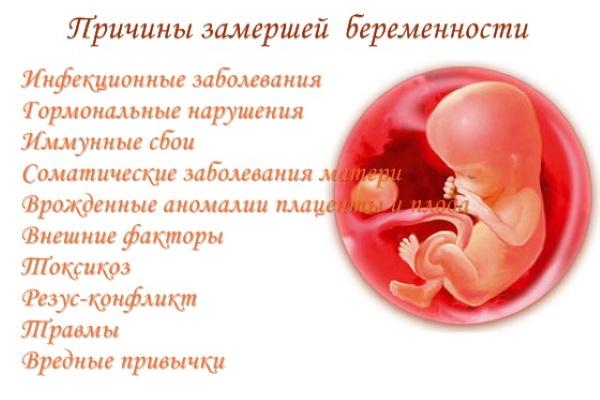 Беременность 5 акушерских недель. Что происходит, УЗИ, размер, развитие плода, ощущения беременной