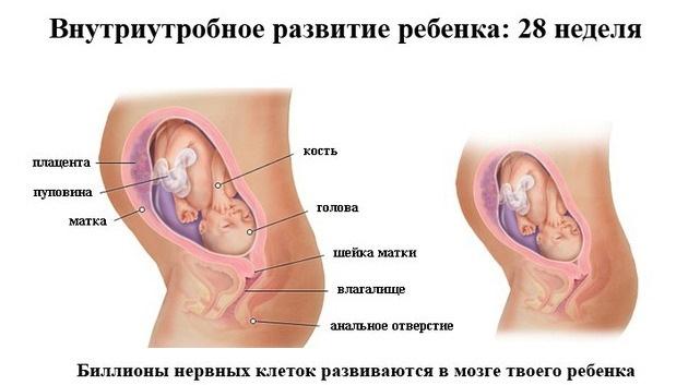 Беременность 28 недель. Развитие плода и ощущения, шевеления, фото, что нужно знать, на что обратить внимание