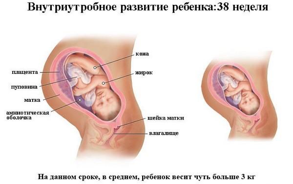 38 неделя беременности. Признаки приближающихся родов, что происходит с плодом, что чувствует женщина, развитие плода