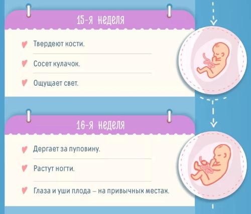 4 месяц беременности. Фото живота, ощущения, развитие плода, размер ребенка, что происходит