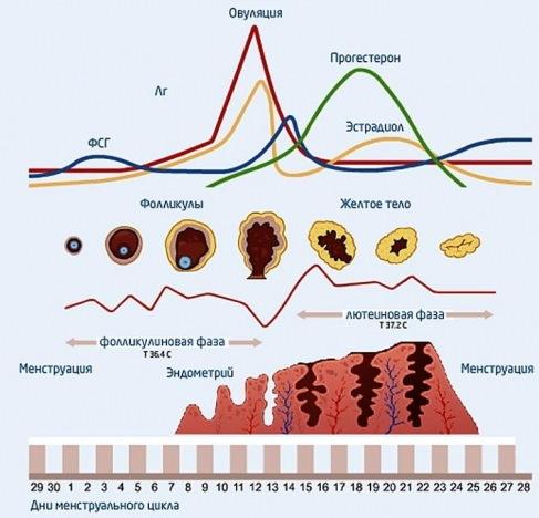 Биохимическая беременность. Что это такое при ЭКО, причины, ХГЧ, может ли перерасти в нормальную, признаки